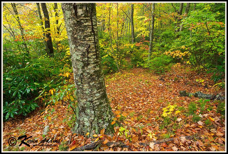 Autumn forest along Flat Laurel Creek