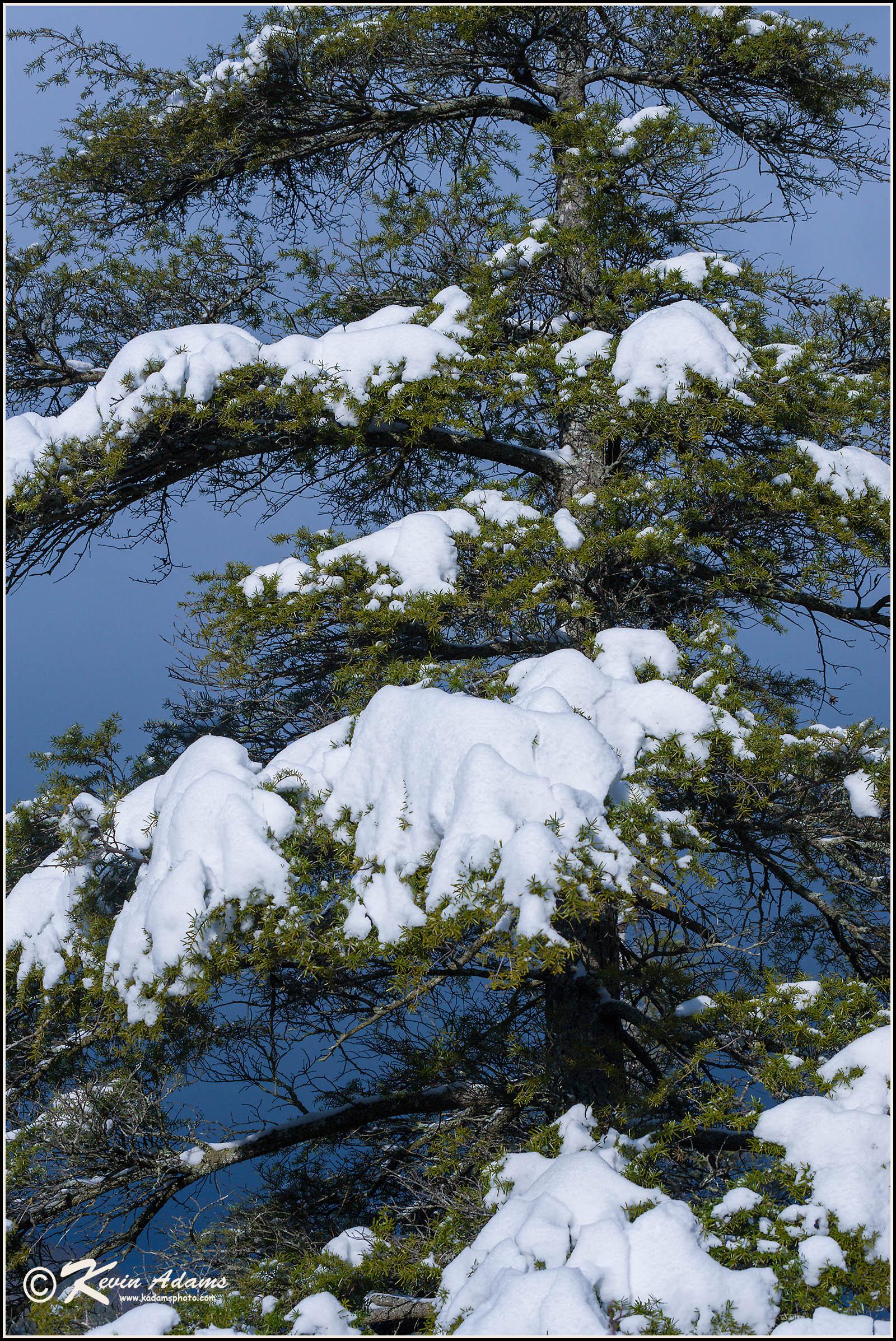Hemlock tree at Linville Falls