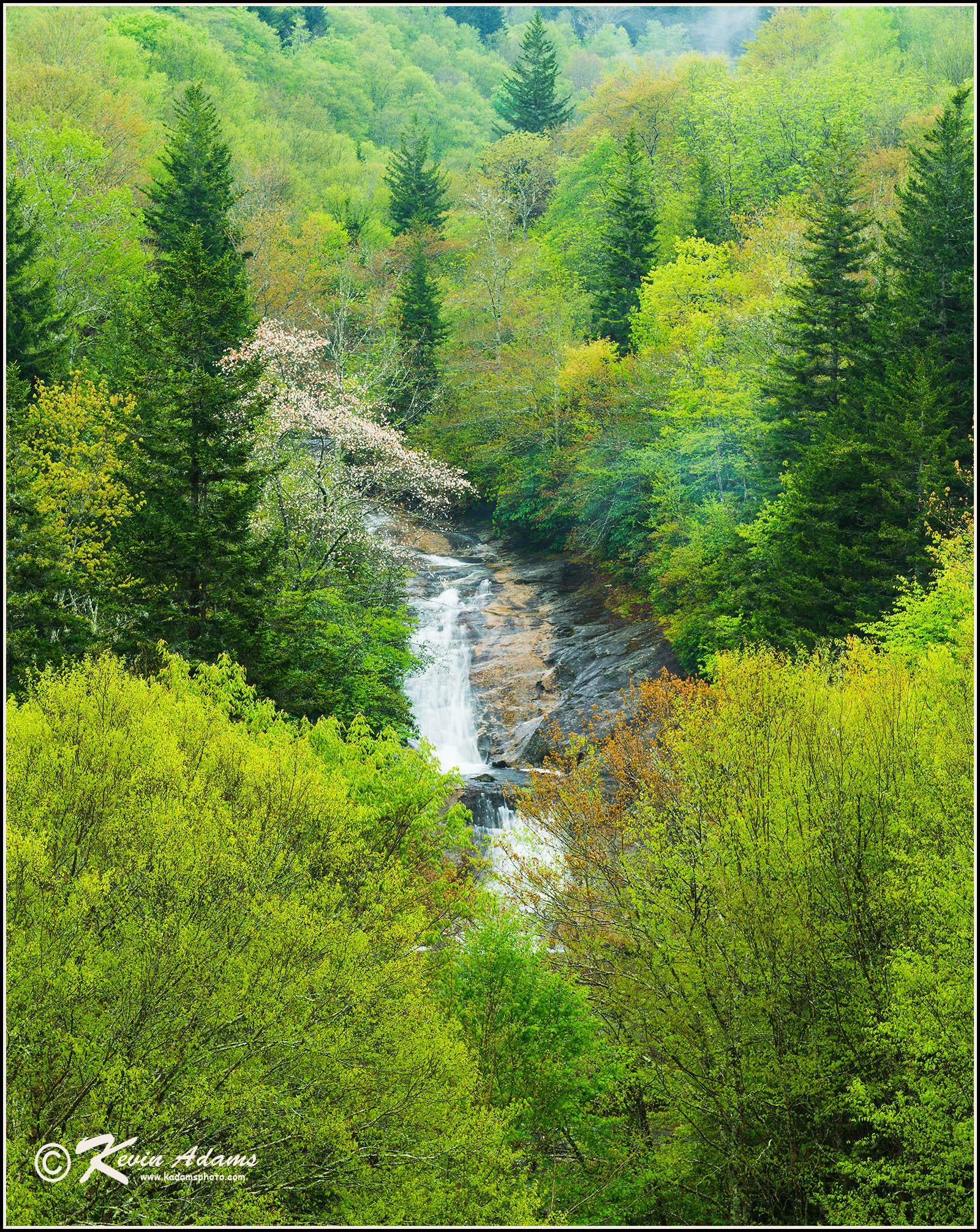 Bubbling Spring Branch Cascades