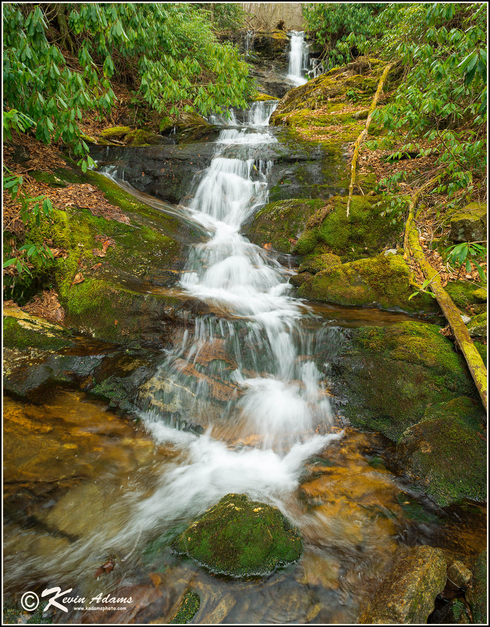 Lyn Lowry Falls